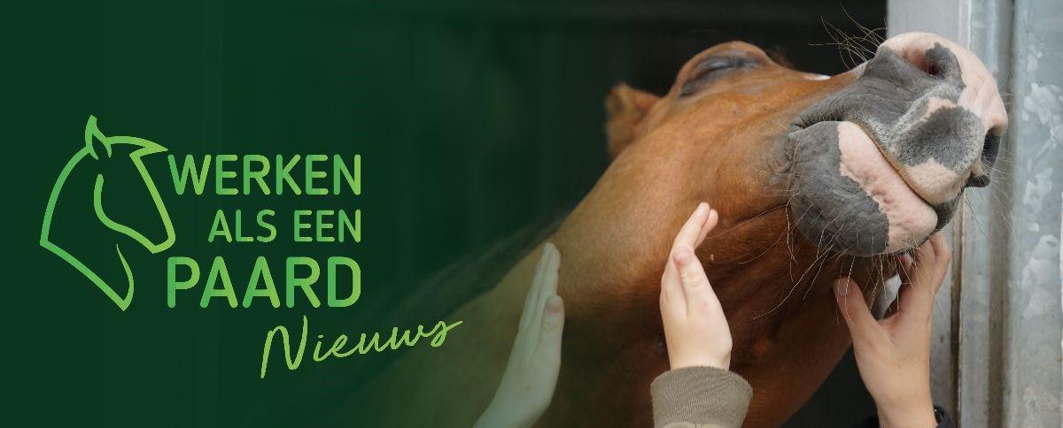 Stichting Werken Als Een Paard - NIEUWS
